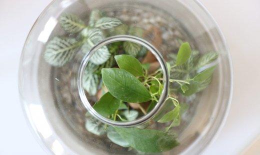Glass & Moss – Design Végétal